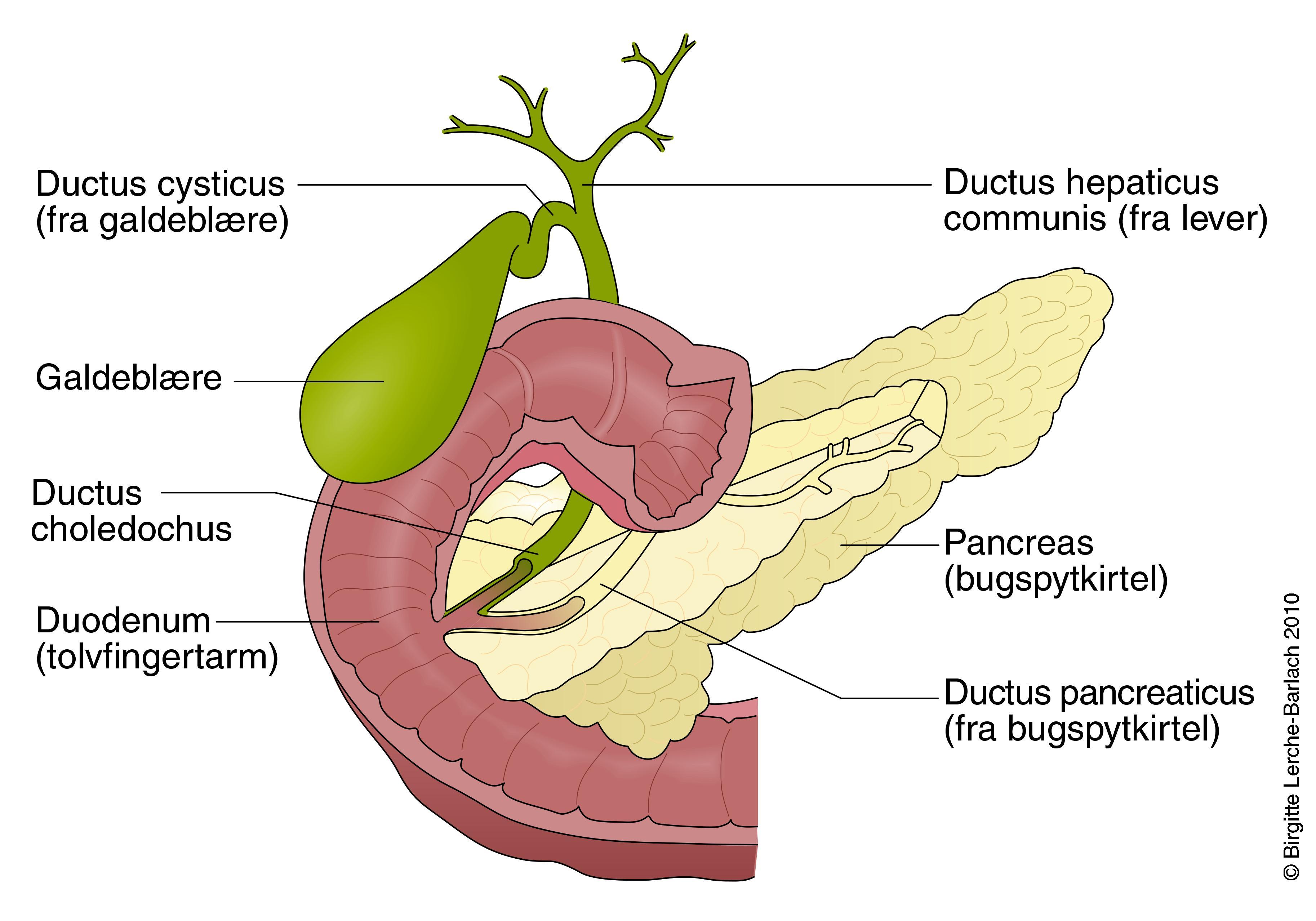 symptomer på sprængt galdeblære